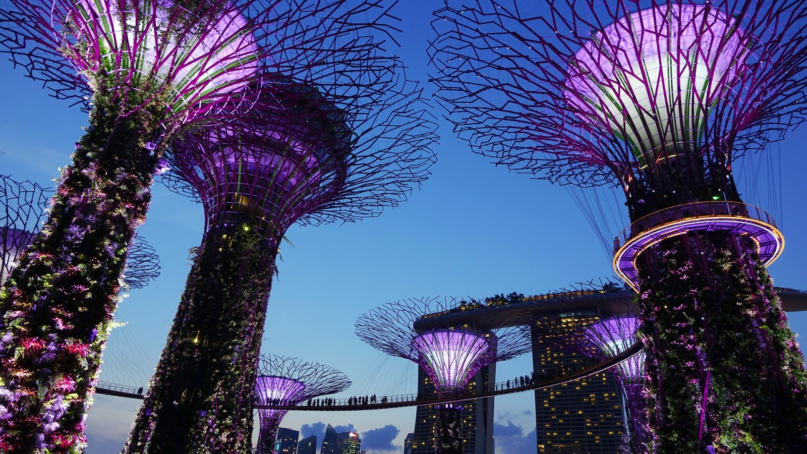 Supertrees. Sustainable installation in Singapore